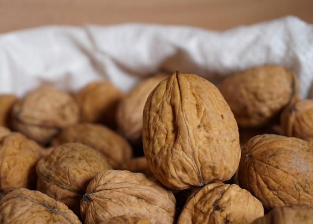 Употребление орехов связали с замедлением набора веса